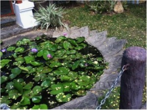 The lotus flower pond that Seemie took a photo of